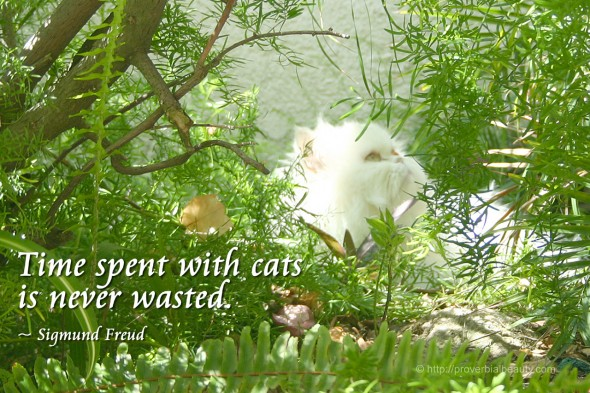 Time spent with cats is never wasted. ~ Sigmund Freud
