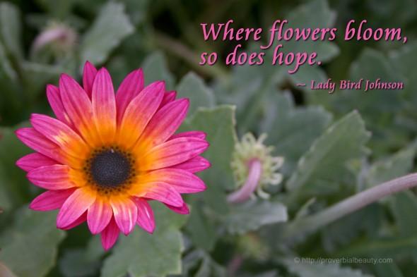 Where flowers bloom, so does hope. ~ Lady Bird Johnson