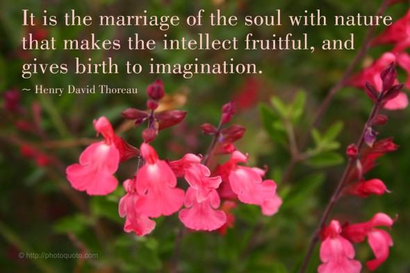 It is the marriage of the soul with nature that makes the intellect fruitful, and gives birth to imagination. ~ Henry David Thoreau