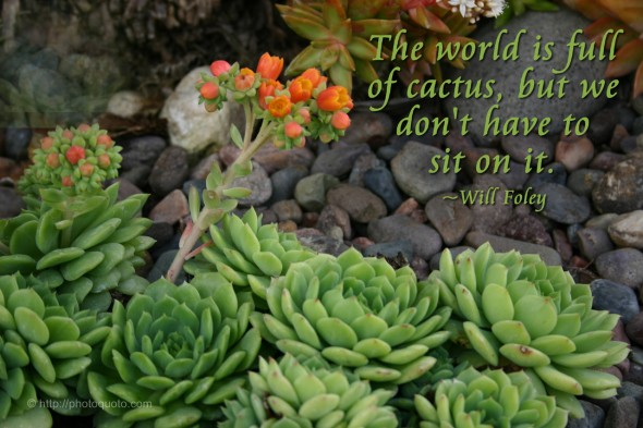 The world is full of cactus, but we don't have to sit on it. ~ Will Foley