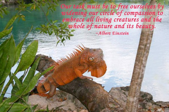 Our task must be to free ourselves by widening our circle of compassion to embrace all living creatures and the whole of nature and its beauty.  ~ Albert Einstein