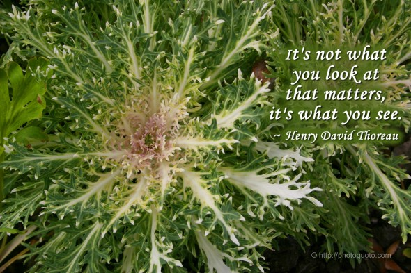 It's not what you look at that matters, it's what you see. ~ Henry David Thoreau