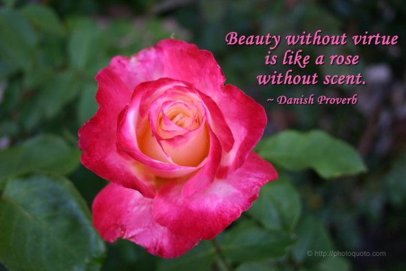 Beauty without virtue is like a rose without scent. ~ Danish Proverb