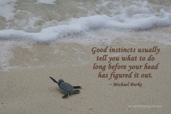 Good instincts usually tell you what to do long before your head has figured it out. ~ Michael Burke