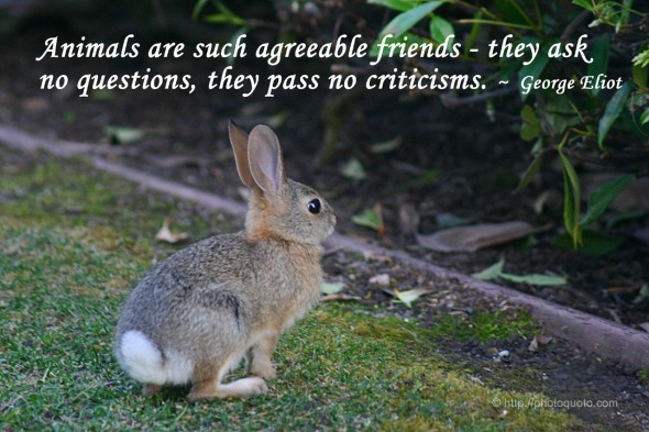 Animals are such agreeable friends - they ask no questions, they pass no criticisms. ~ George Eliot