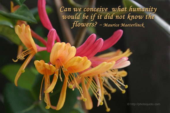 Can we conceive what humanity would be if it did not know the flowers? ~ Maurice Maeterlinck