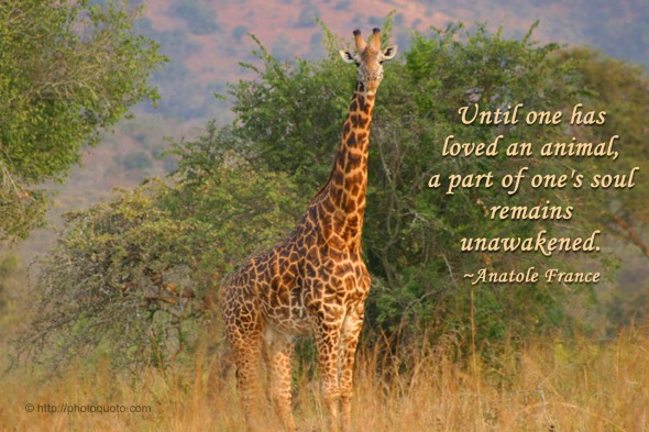 Until one has loved an animal, a part of one's soul remains unawakened. ~ Anatole France