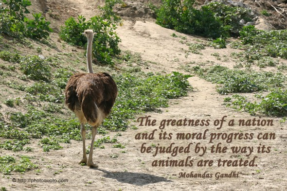 The greatness of a nation and its moral progress can be judged by the way its animals are treated. ~ Mohandas Gandhi