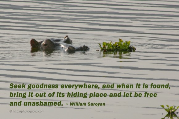 Seek goodness everywhere, and when it is found, bring it out of its hiding place and let be free and unashamed. ~ William Saroyan
