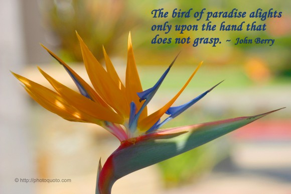 The bird of paradise alights only upon the hand that does not grasp. ~ John Berry