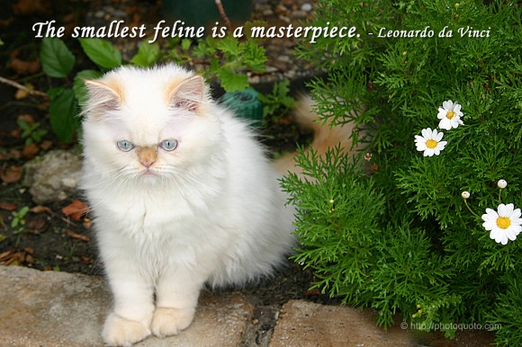 The smallest feline is a masterpiece. ~ Leonardo da Vinci