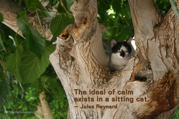 The ideal of calm exists in a sitting cat. ~ Jules Reynard