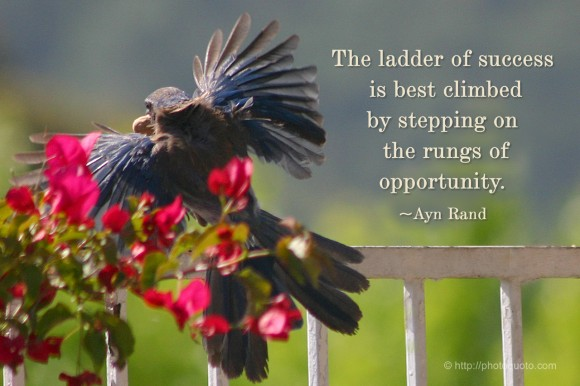 The ladder of success is best climbed by stepping on the rungs of opportunity. ~ Ayn Rand