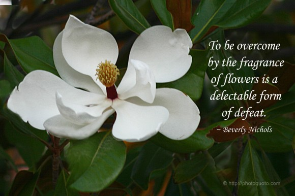 To be overcome by the fragrance of flowers is a delectable form of defeat. ~ Beverly Nichols