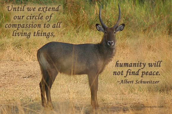 Until we extend our circle of compassion to all living things, humanity will not find peace. ~ Albert Schweitzer