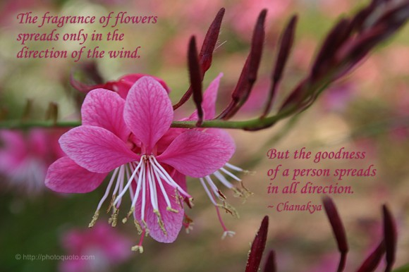 The fragrance of flowers spreads only in the direction of the wind. But the goodness of a person spreads in all direction. ~ Chanakya