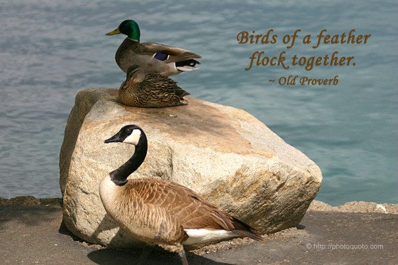 Birds of a feather flock together. ~ Old Proverb