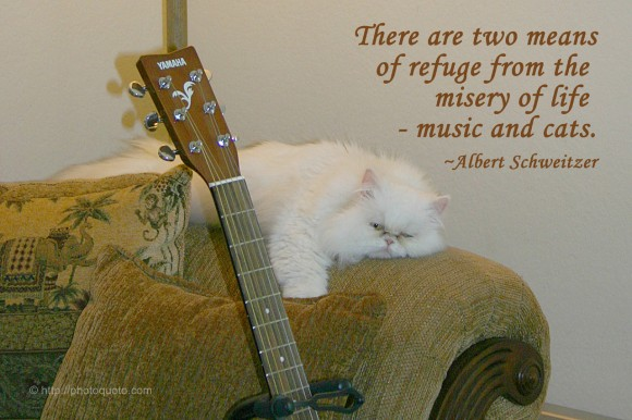 There are two means of refuge from the misery of life - music and cats. ~ Albert Schweitzer
