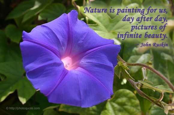 Nature is painting for us, day after day, pictures of infinite beauty. ~ John Ruskin