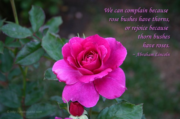 We can complain because rose bushes have thorns, or rejoice because thorn bushes have roses. ~ Abraham Lincoln