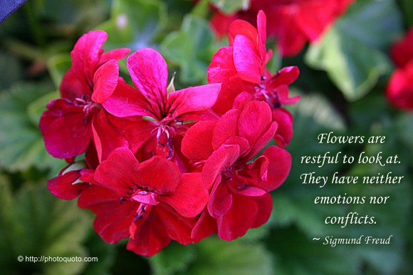 Flowers are restful to look at. They have neither emotions nor conflicts. ~ Sigmund Freud
