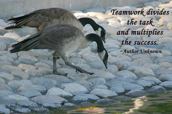 Teamwork divides the task and multiplies the success. ~ Author Unknown