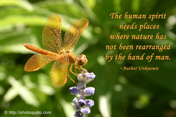 The human spirit needs places where nature has not been rearranged by