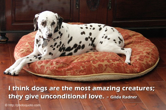 I think dogs are the most amazing creatures; they give unconditional love. ~ Gilda Radner