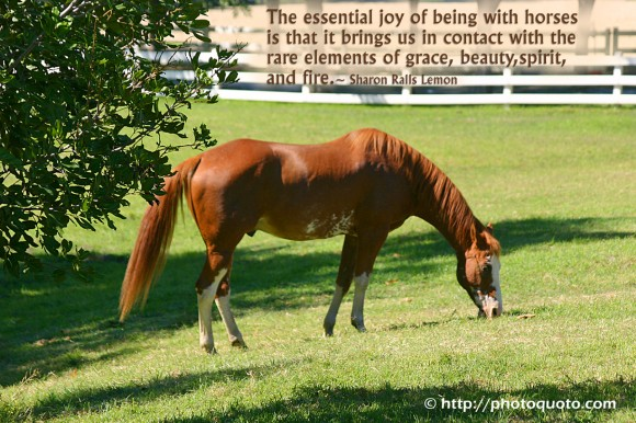 The essential joy of being with horses is that it brings us in contact with the rare elements of grace, beauty, spirit, and fire. ~ Sharon Ralls Lemon