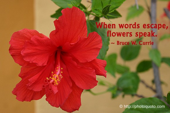 When words escape, flowers speak. ~ Bruce W. Currie