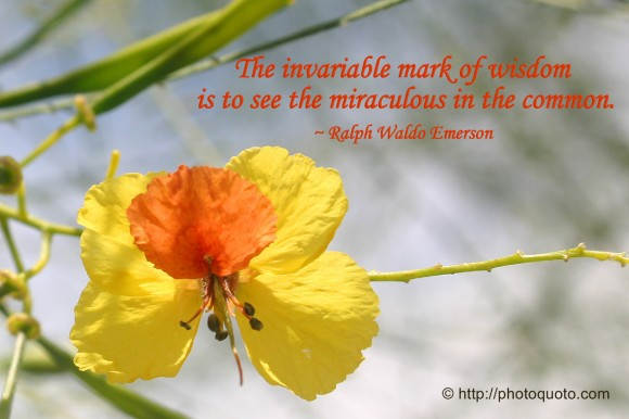 The invariable mark of wisdom is to see the miraculous in the common. ~ Ralph Waldo Emerson