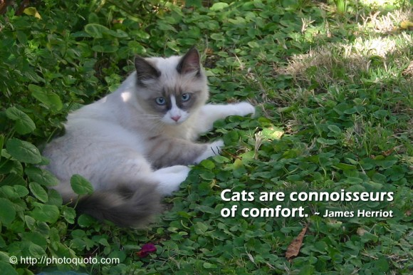 Cats are connoisseurs of comfort. ~ James Herriot