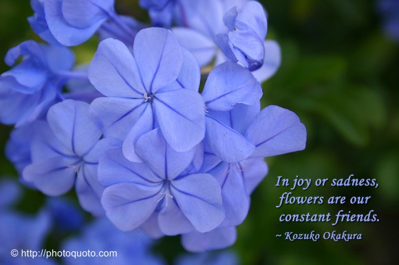 In joy or sadness, flowers are our friends. ~ Kozuko Okakura