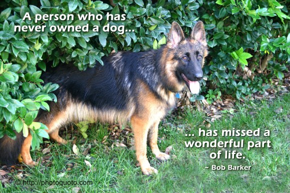 A person who has never owned a dog has missed a wonderful part of life. ~ Bob Barker