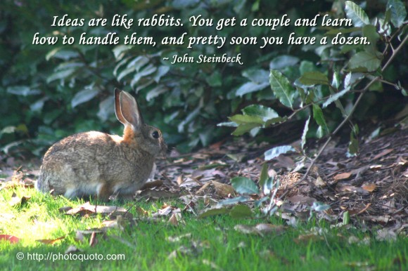 Ideas are like rabbits. You get a couple and learn how to handle them, and pretty soon you have a dozen. ~ John Steinbeck
