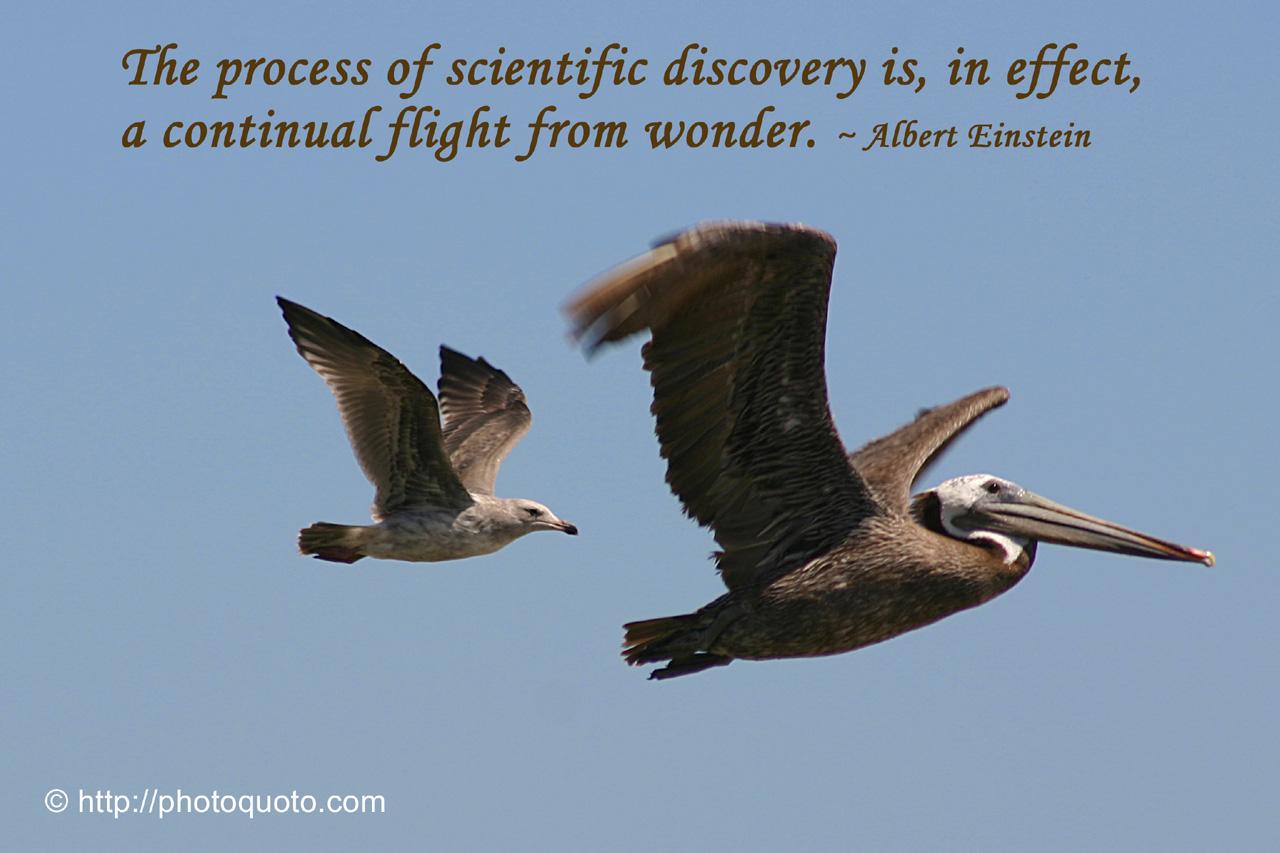 pelican quotes