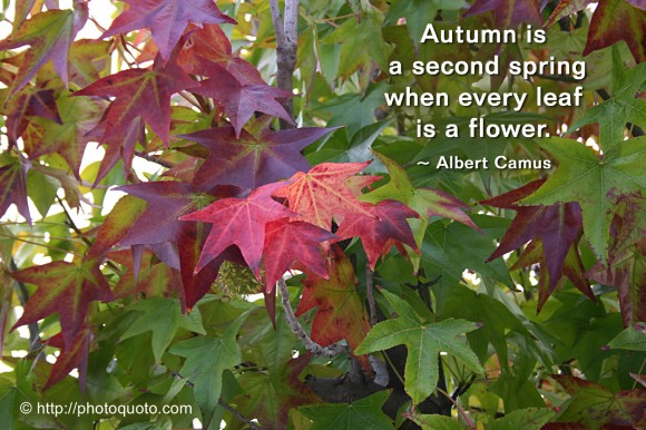 Autumn is a second spring when every leaf is a flower. ~ Albert Camus
