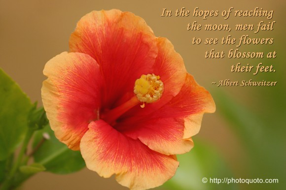 In the hopes of reaching the moon, men fail to see the flowers that blossom at their feet. ~ Albert Schweitzer