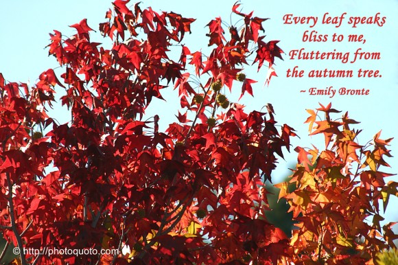 Every leaf speaks bliss to me, fluttering from the autumn tree. ~ Emily Bronte