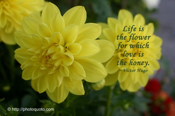 Life is the flower for which love is the honey. ~ Victor Hugo
