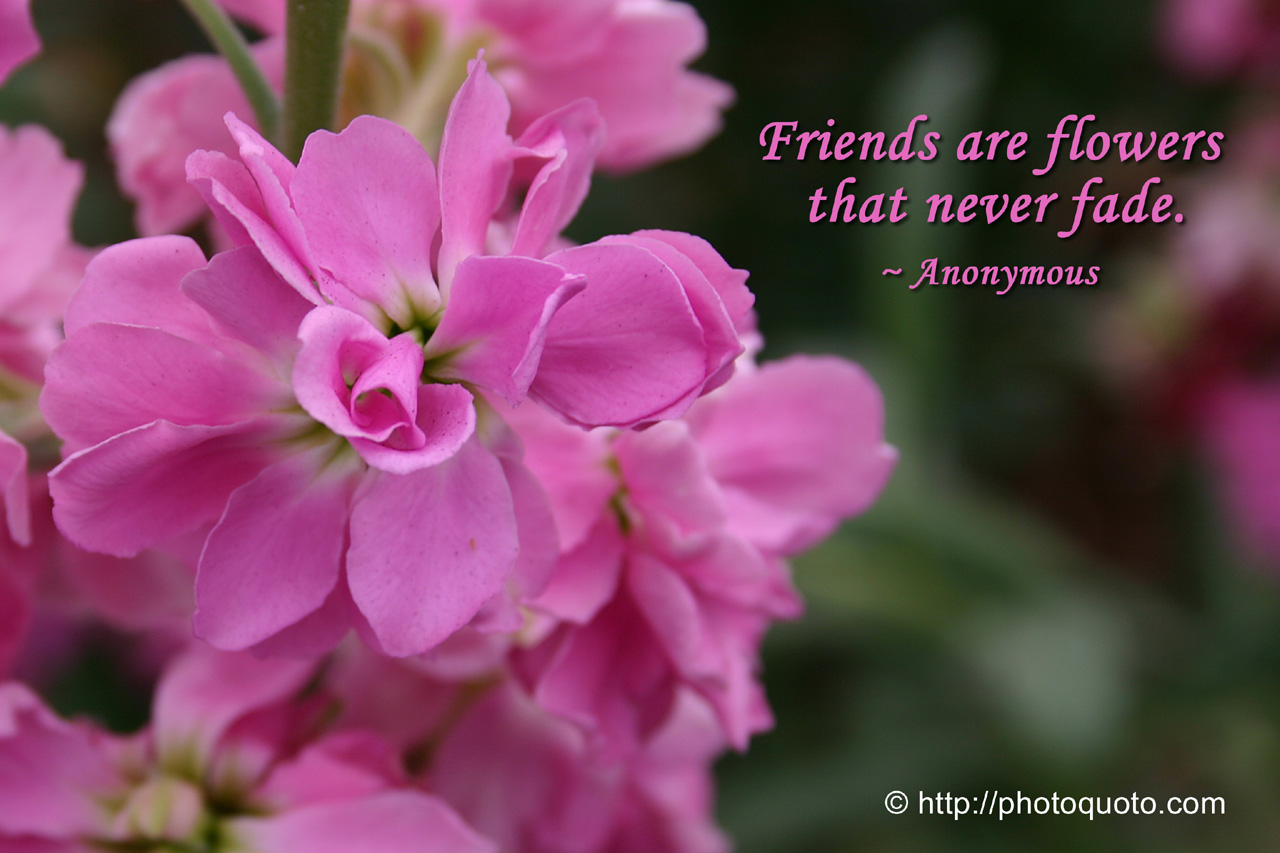 Pics Photos - Friendship Flowers Quotes