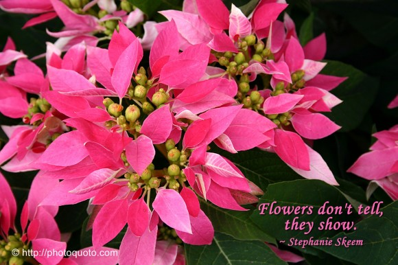 Flowers don't tell, they show. ~ Stephanie Skeem