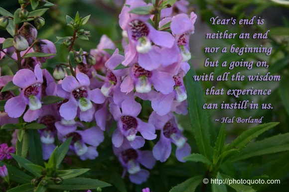 Year's end is neither an end nor a beginning but a going on, with all the wisdom that experience can instill in us. ~ Hal Borland