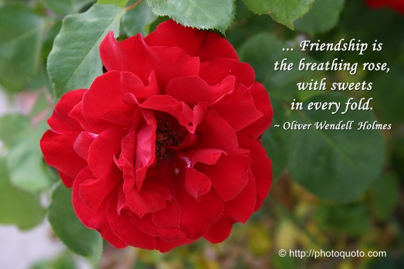 ... Friendship is the breathing rose, with sweets in every fold. ~ Oliver Wendell Holmes