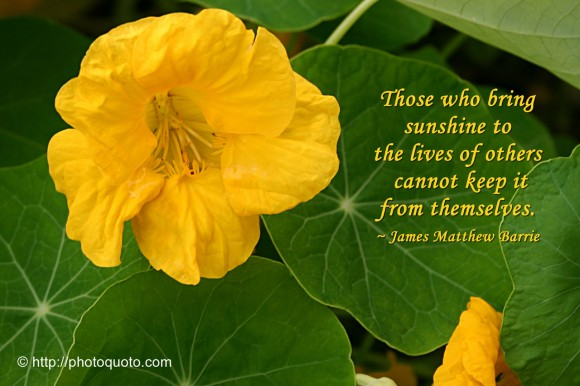 Those who bring sunshine to the lives of others cannot keep it from themselves. ~ James Matthew Barrie