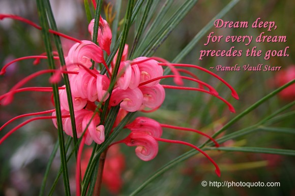 Dream deep, for every dream precedes the goal. ~ Pamela Vaull Starr