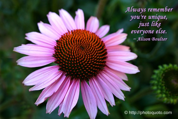 Always remember you're unique, just like everyone else. ~ Alison Boulter