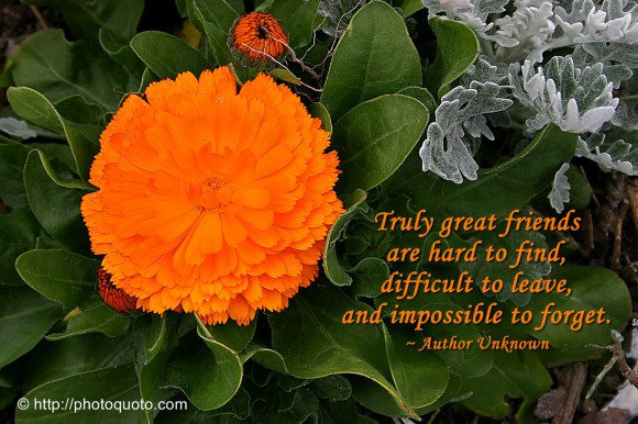 Truly great friends are hard to find, difficult to leave, and impossible to forget. ~ Author Unknown