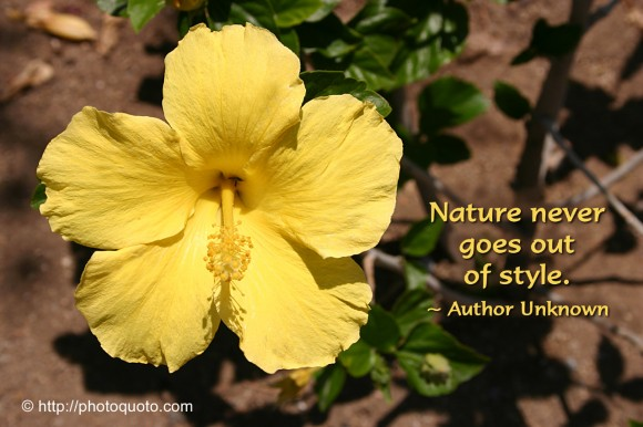 Nature never goes out of style. ~ Author Unknown