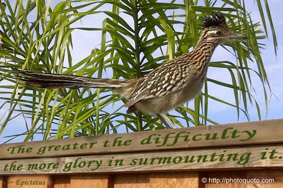 The greater the difficulty the more glory in surmounting it. ~ Epictetus